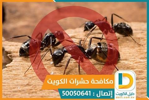 مكافحة الحشرات بالكويت 50050641